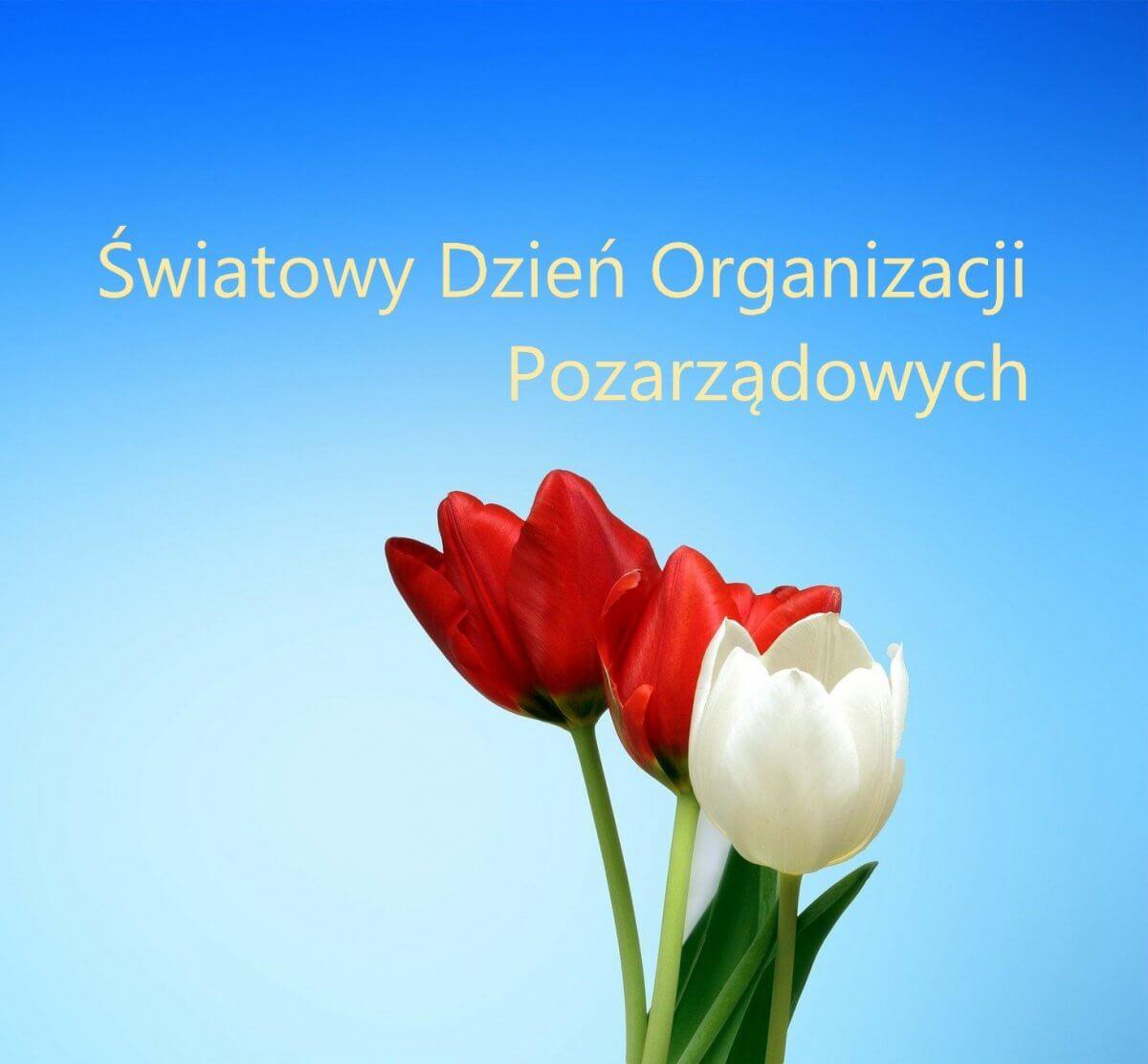 Trzy kwiaty tulipany w kolorach czerwony i biały. W tle niebieska plansza z napisem Światowy Dzień Organizacji Pozarządowych.