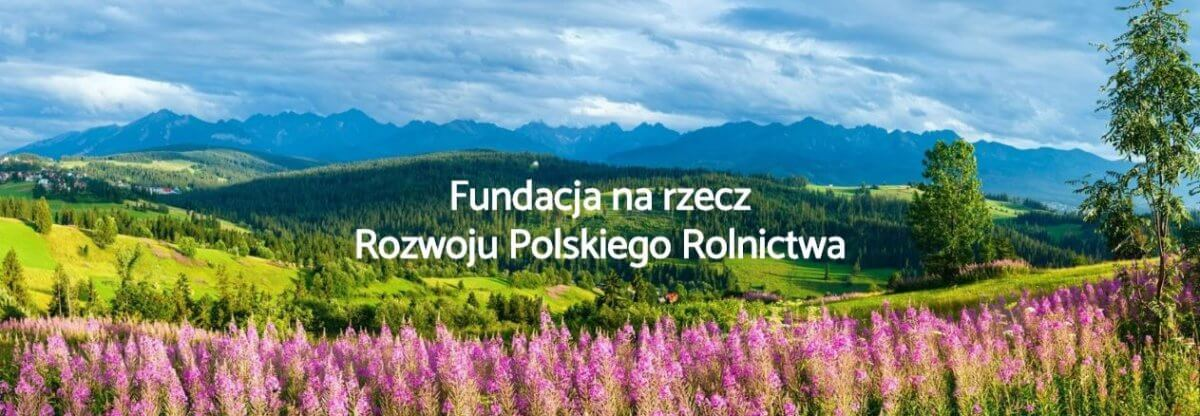 Łąka z różowymi kwiatkami na tle gór